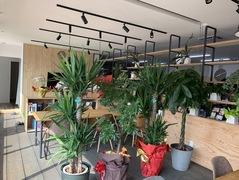 【事務所内の観葉植物たち】