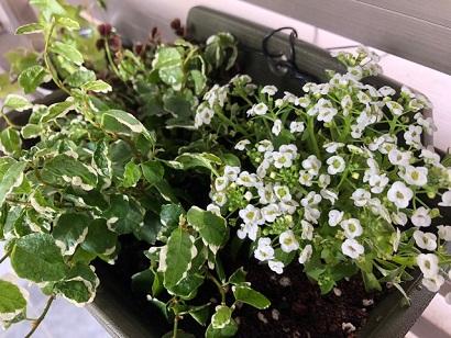 植物1.JPG
