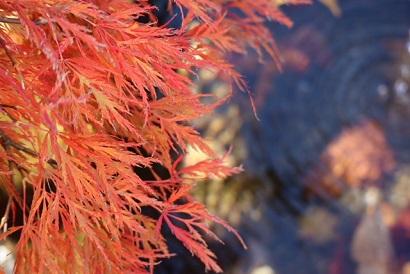 池と紅葉.JPG
