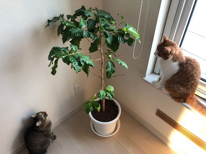 観葉植物と猫.JPG